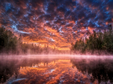 1392385586867_amazing_skies_amazing_reflection_rive_forest.jpg